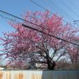 3月の風景